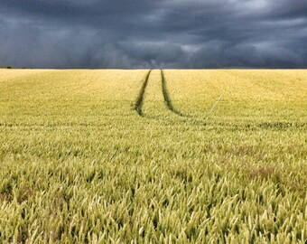 Corn field with tracks and moody sky: Digital download photograph