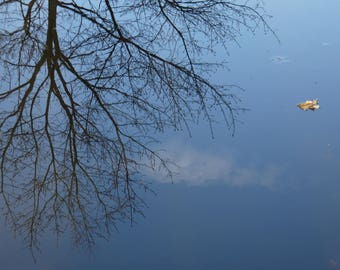Reflection of water. Photograph of tree. Nature art.