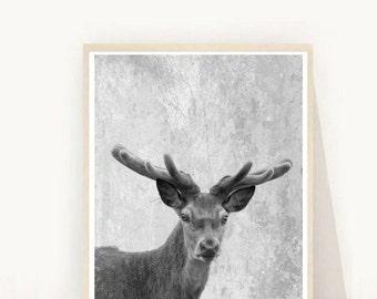 Deer Art Print, Printable Art, Deer Photo, Black And White Photo, Deer head, Deer Print,  Wall Decor, Digital  Download