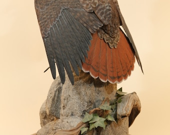 Red-tailed Hawk Wood Carving