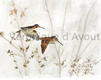 Watercolor flying Woodcock