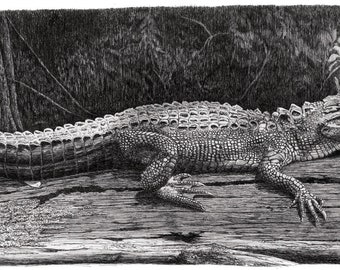 Alligator art, pen and ink drawing,tropical art, Alligator prints,Reptile prints, everglades art, Florida art,alligator prints, original art