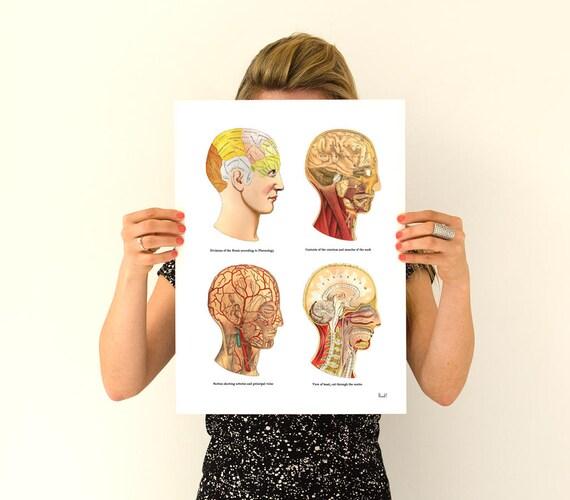 Study of the Brain, Human Anatomy Art, Anatomical prints, wall art poster, Human Head parts anatomy art, medical art  wall art, SKA200WA3