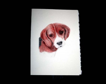Beagle note cards Set of 8