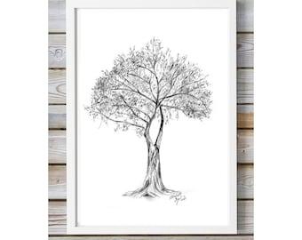 Italian Tree art - Pencil drawing - Giclee print -  nature Decor  - large Tree sketch - pencil Zen drawing Tree illustration