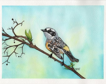 Yellow Breasted Warbler - 9x12in. Original Watercolor Painting