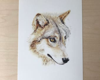 Wolf print - Timber Wolf - archival giclee print - A4 size - fine art print - wolf illustration - coloured pencil drawing - wildlife art