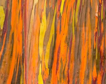 Rainbow Eucalyptus Tree Bark 8x10 Print