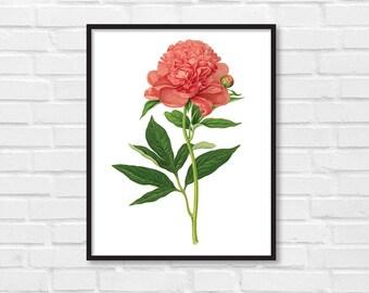 Floral Print / Botanical Print / Floral Clipart / Vintage Flower Illustration Print / DIY / Peony Print / Floral Print / Art Print [19]