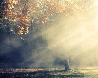Autumn Landscape Photograph - sun rays golden trees heavenly smokey foggy ethereal dreamy 8x10