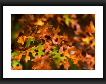 A Fine Art Print of Fall Foliage, Texas, Photograph