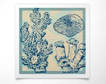 Coral Print- Sea Life Prints- Seashell Decor -Seashell Wall Art- Seashell Prints- Seashell Wall Decor- Ocean Decor-Art  Ocean Nursery Decor