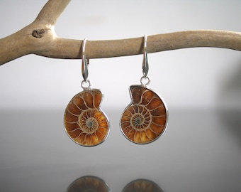Sterling Silver Ammonite Earrings Fossil Jewellery Semi-polished Nature Earrings Silver Earring Gift Nature Jewellery Marked Stamped 925