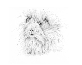 Limited Edition Giclee Guinea Pig Art Print