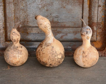 Dried Gourds, 3 Bottle Gourds, 3 Birdhouse Gourds, Organically Grown Gourds, Dried Gourds for Craft Projects, Gourds for Farmhouse Decor