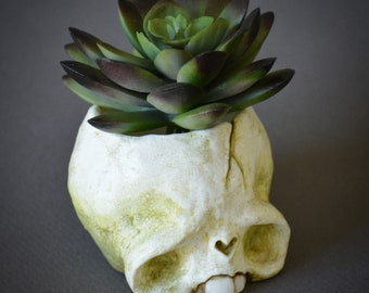 Skull planter with faux succulent 1