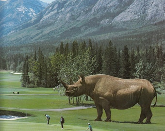 Print - Brian, There's a Bloody Great Rhino on the Fairway Collage