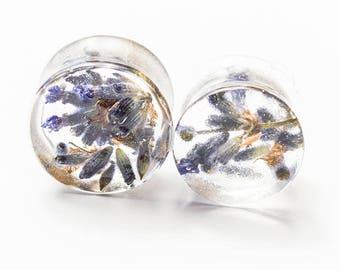 Lavender Plugs