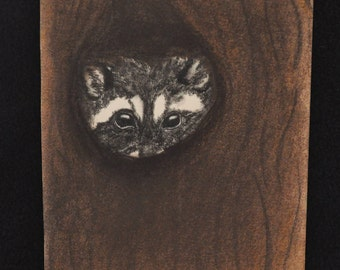 Hand Drawn Raccoon in Tree