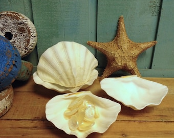 Large Clam Shell Half Bowl Jewelry Tea Light Holder by CastawaysHall - READY TO SHIP