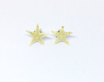 Real starfish earring studs