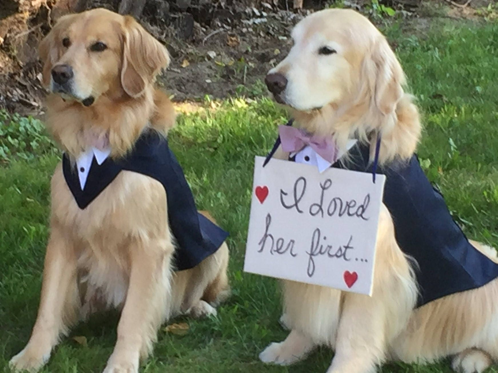 Large Dog Wedding Tuxedo Large Dog Wedding Attire Dog
