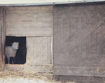 Smiling Sheep Print, Rustic Decor, Farmhouse, Shabby Chic, Barn, Farm