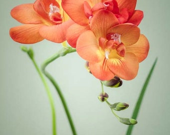 Floral Wall Art, Flower Photography, Wall Art Prints Floral, Wall Art for Bedroom, Wall Decor, Living Room Wall Art, Orange, Green