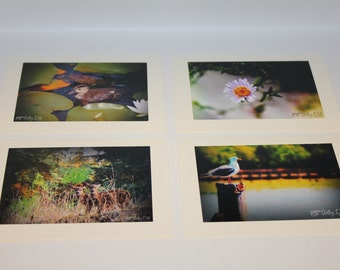 All Occasion Blank Cards - A Walk in the Park! - Set of 4 Photo Cards