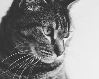 Cat Portrait, Fine Art Photography, Black and White Animal Print, Cat Wall Decor, Tabby Cat Print