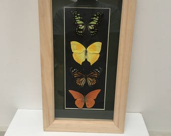 4x Real Butterflies/insect/taxidermy/Lepidoptera.