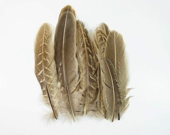 10 Pheasant Feathers 4-6 Inches Natural Feathers Craft Supplies Scrapbooking Hat Embellishments Wedding Supplies 02