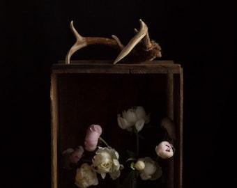 Dark Botanical studio No. 003