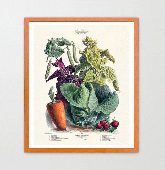 The Vegetable Garden - Garden Art - Garden Illustration - Garden Poster - Kitchen Poster - Kitchen Art - Carrots - Food Poster - Food Art