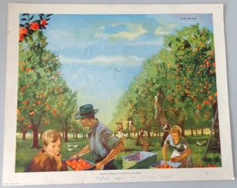 1960 Vintage industrial poster, Mac Tatchell Picking apples in a Kentish Orchard, Original Macmillan Poster (Print)