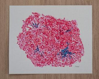 Original Screen Print  Phlox Flowers Bouquet Hand Pulled Fine Art