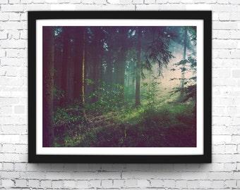 Forest Art Print, Dark Forest, Modern Home Decor, Forest Print, Wall Art, Nature Poster, Nature Home Decor, Nature Photo Print, Forest Print