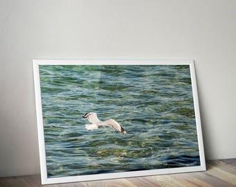 SEAGULL PRINT| Sea wall art| Sea poster