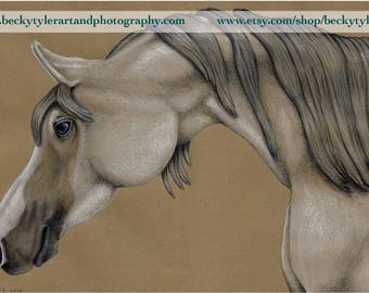 Arabian Horse Original Drawing