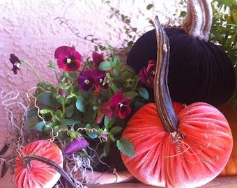 3 Velvet Pumpkins with Real Stems & 8 Velvet Acorns with Real Acorn Shells - #54