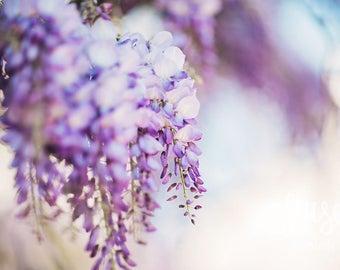 Flower Photography, Purple, Botanical Art Print, Shabby Chic Nature Photography, Romantic Home Decor - Hanging On