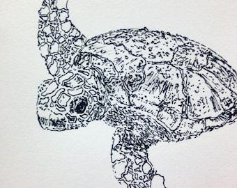 Sokatra, the Wanderer: Hawksbill Turtle Sketch