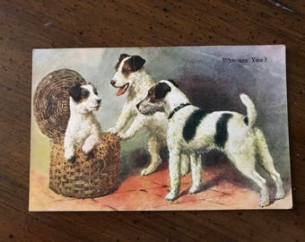 Vintage Fox Terrier dog postcard wirehaired fox terrier