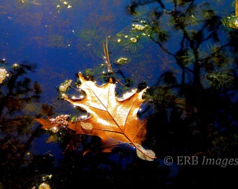 Oak Leaf on Water - Fine Art Photograph - Home Decor