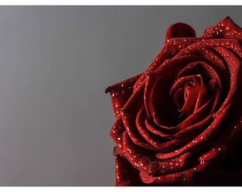 Photography of red rose with water drops, macro photography, fine art photography, home decoration, photoprint, mother's day