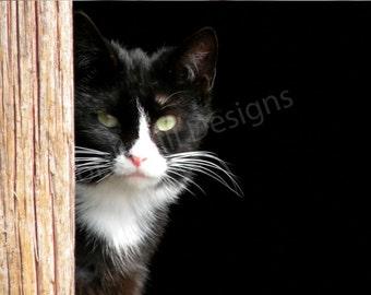 Barn Cat 1,  8 x 10 Limited Edition Print