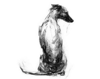 Whippet Art Print - fine art dog print - whippet gift - whippet sketch print