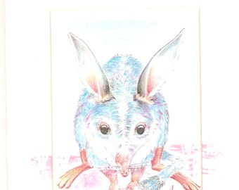Bilby by Misha