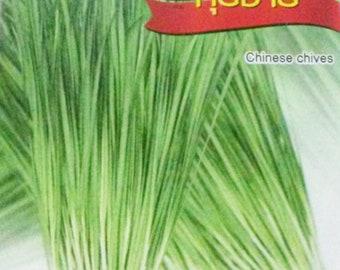 Chinese Chives 500  Allium tuberosum seeds