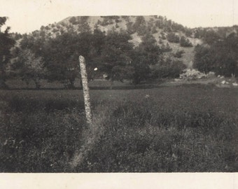 vintage photo Tree Stick Alone in Field Dream Time Abstract unusual